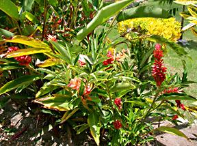 altun-ha-orchids